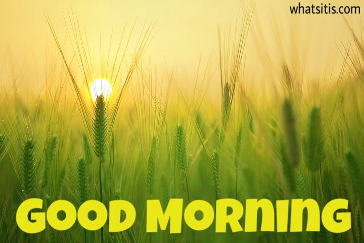Best Good Morning Images For Whatsapp Free Download