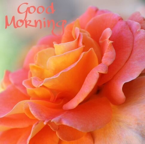 Good Morning Images With Flowers HD | Good Morning Flowers Pictures Wallpapers