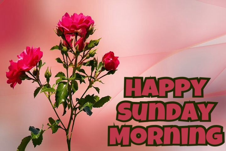 Happy Sunday Good Morning wishes Images Quotes For Whatsapp Free Download