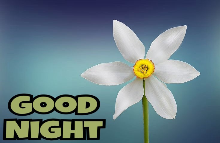 Best good night images for whatsapp free download