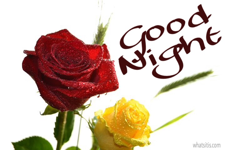 Good night red and yellow rose image