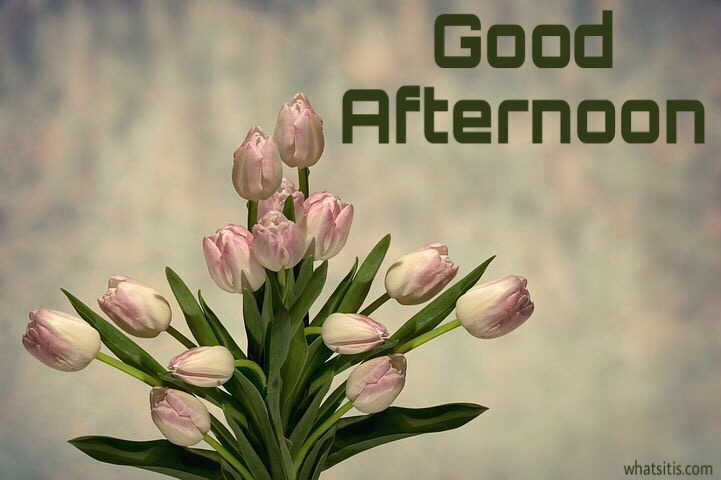 Good Afternoon Flowers Photo