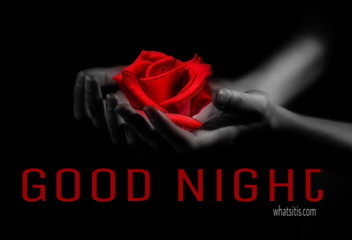 55 Good Night Flowers Wallpapers Pictures With Roses For Lovers Frd