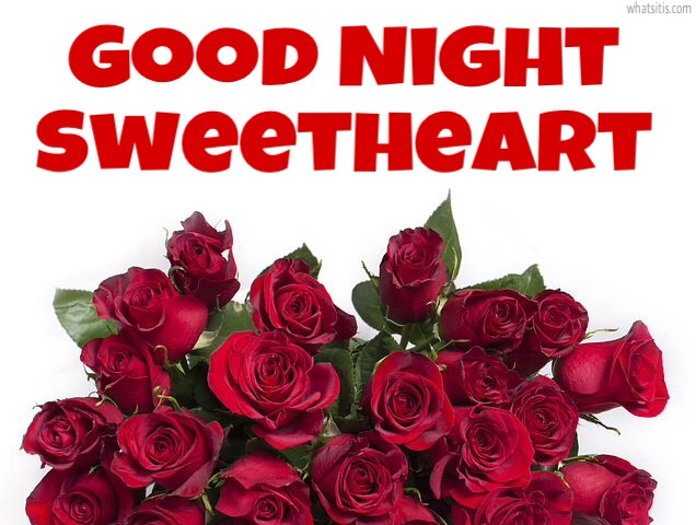 good night rose flowers for lovers