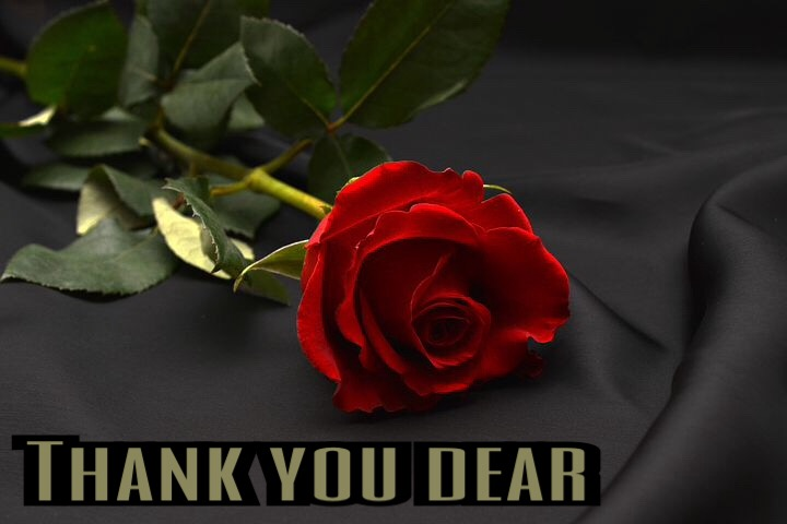 Romantic Thank you images download with rose