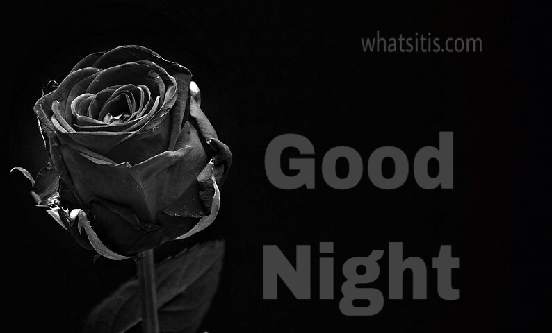Most beautiful good night image with flower