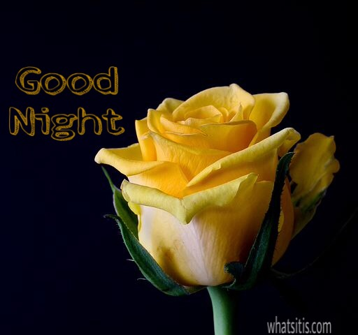 Good night image with yellow rose