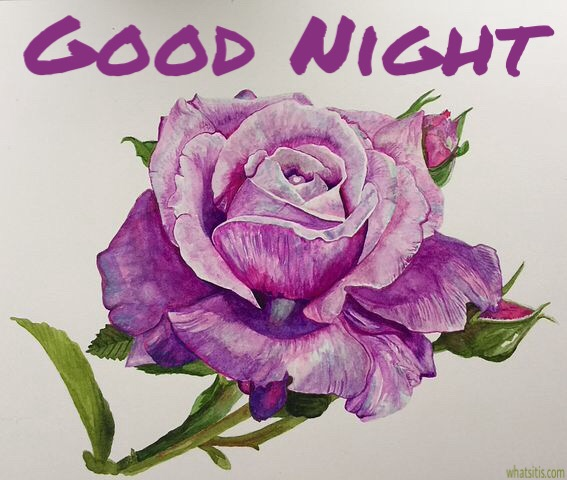 55 Good Night Flowers Wallpapers , Pictures With Roses For
