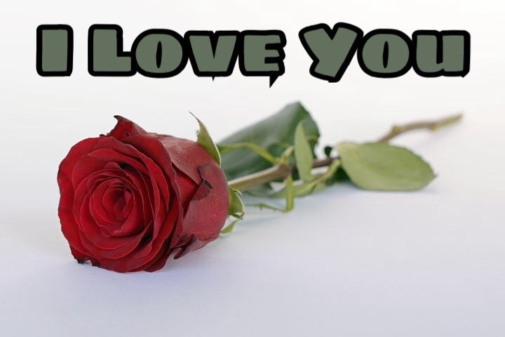 I love you rose image download