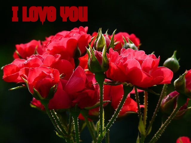 i love you images with roses download