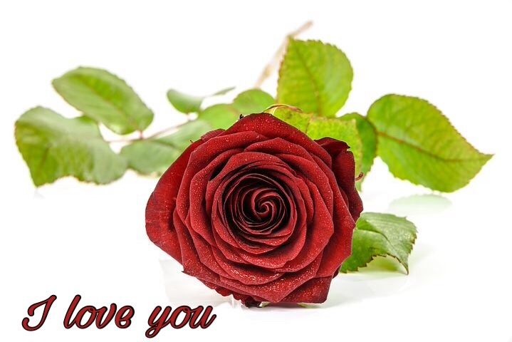 Love you Wallpapers with red rose