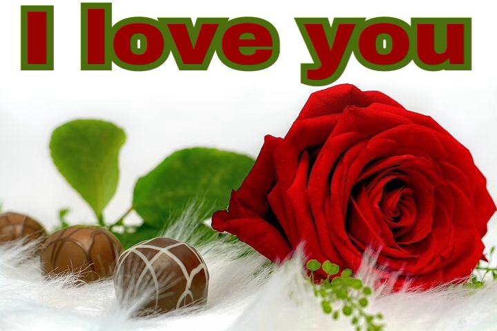 Rose love images download for whatsapp