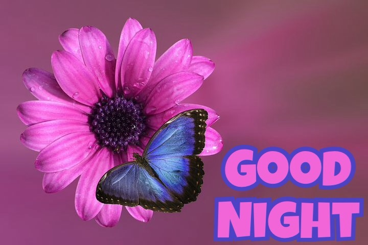 Good Night With Flowers Pictures
