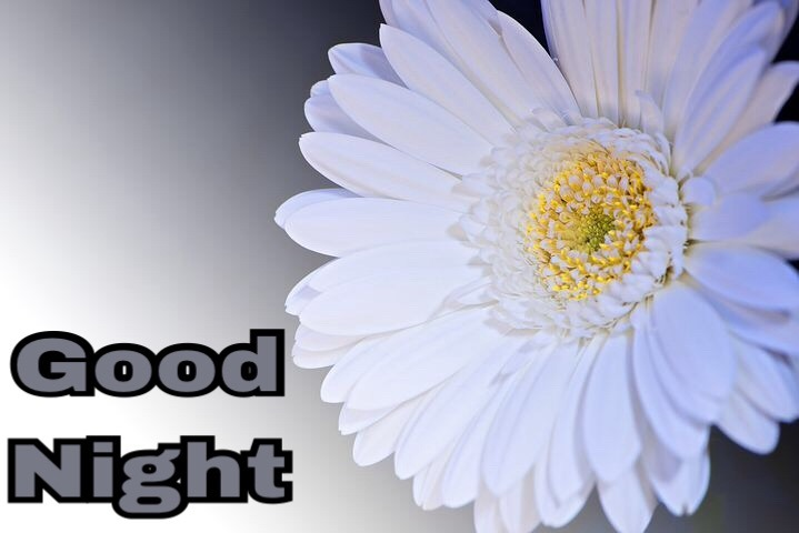 Good Night Flowers Images Hd With Message Of Good Night