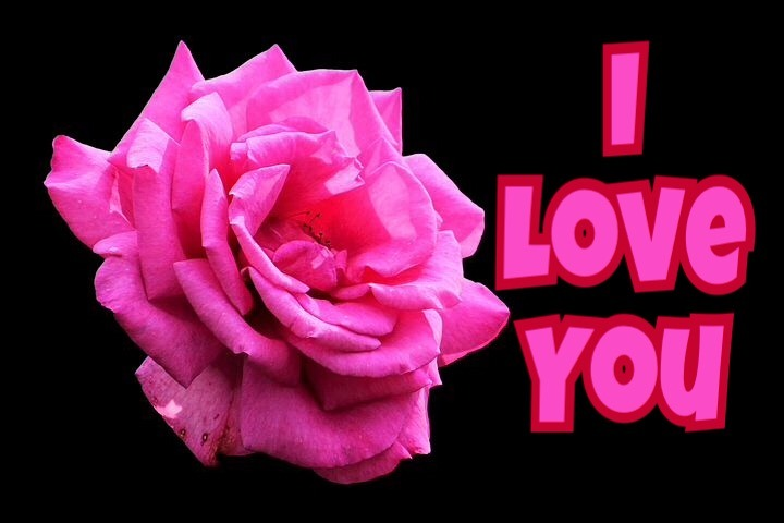 Pink rose I love you image