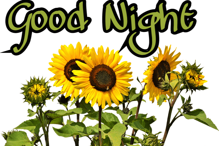 55 good night flowers wallpapers pictures with roses for
