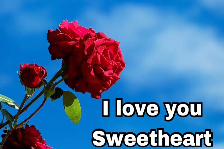 Sweet I love you rose image download
