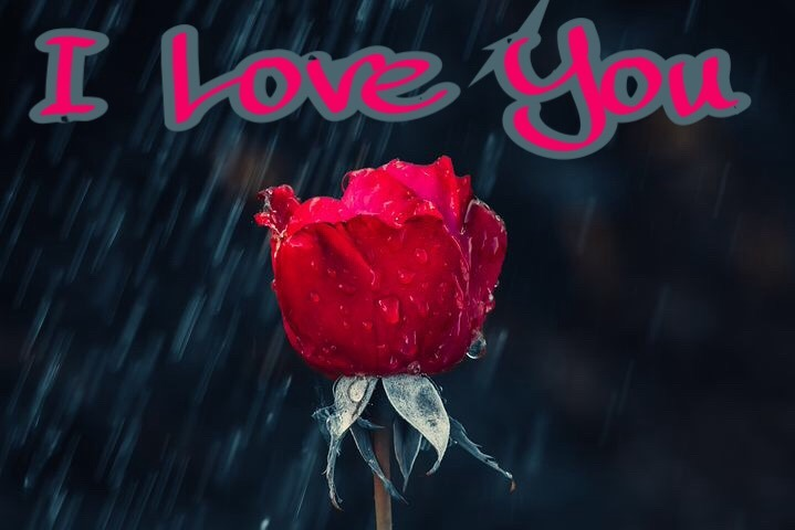 Special image for rose day with I love you Msg