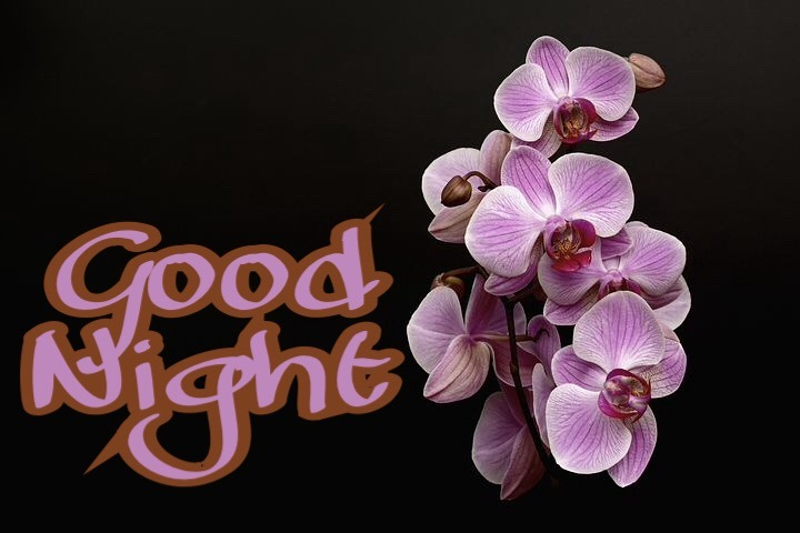 DOWNLOAD GOOD NIGHT FLOWERS WALLPAPERS