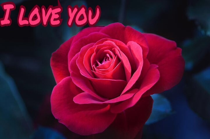 I love you image with red roses