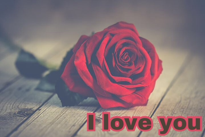 Love rose image