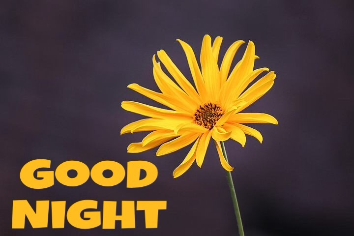 Good Night Flowers For Facebook