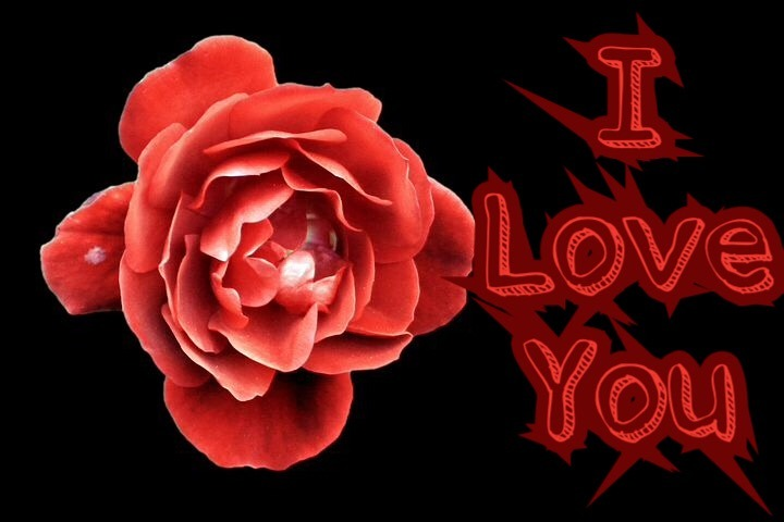 Rose for love with i love you Msg