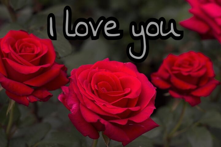 Love you pic with red rose