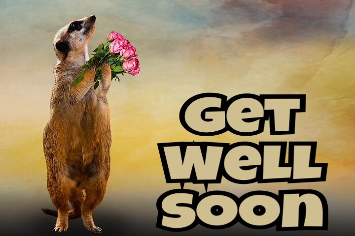 Get well soon whatsapp images download free