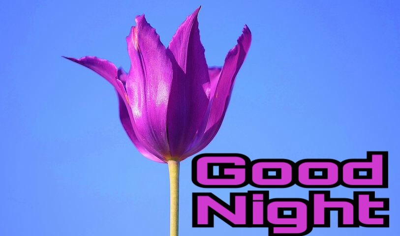 Nice good night flowers images