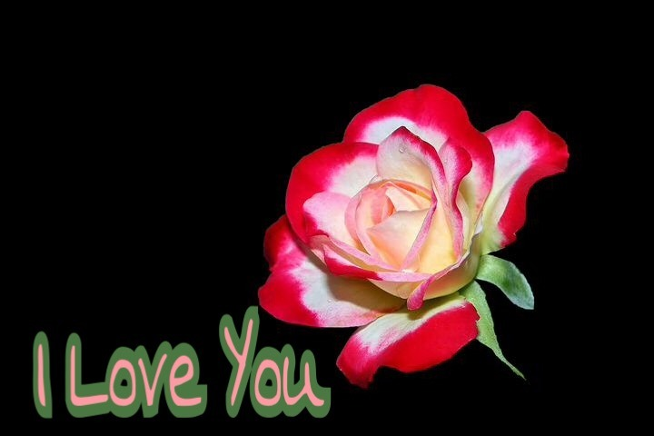 Rose image with i love you