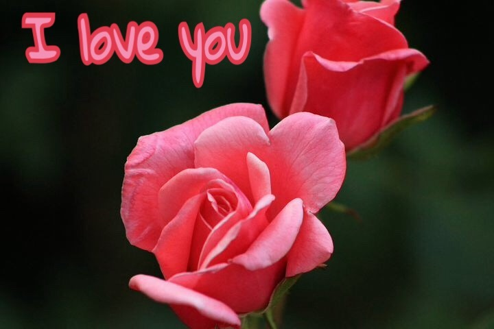Rose image with love you Messages