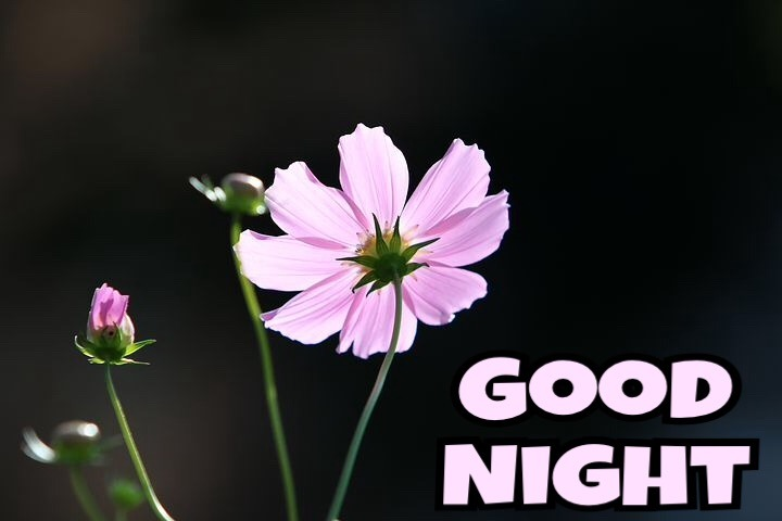 Good Night With Flowers Images
