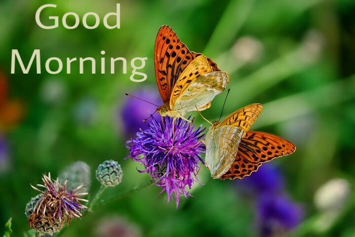 Good morning image with flowers and butterflies