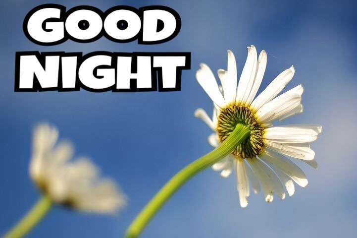 New Good Night Images With Flowers