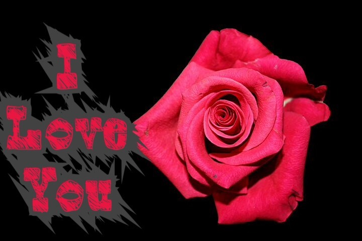 I love you rose image wallpaper
