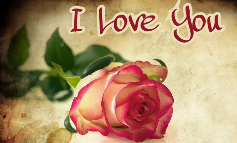 I love you rose
