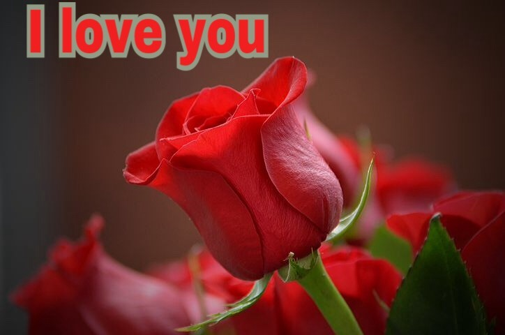 I love you red rose wallpaper