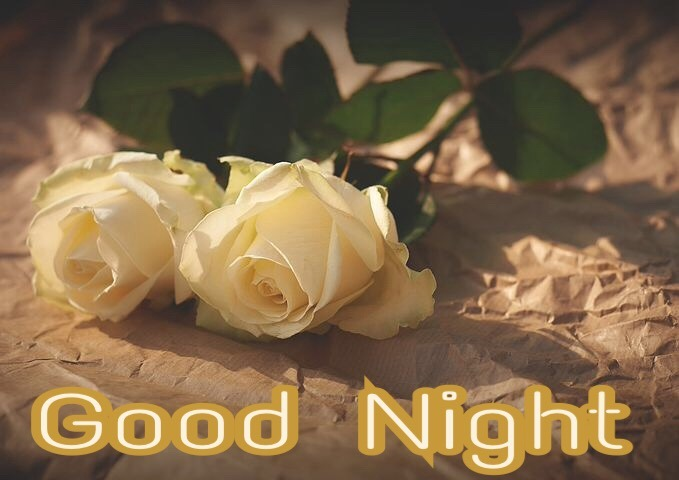 Good Night Rose Images Wallpapers