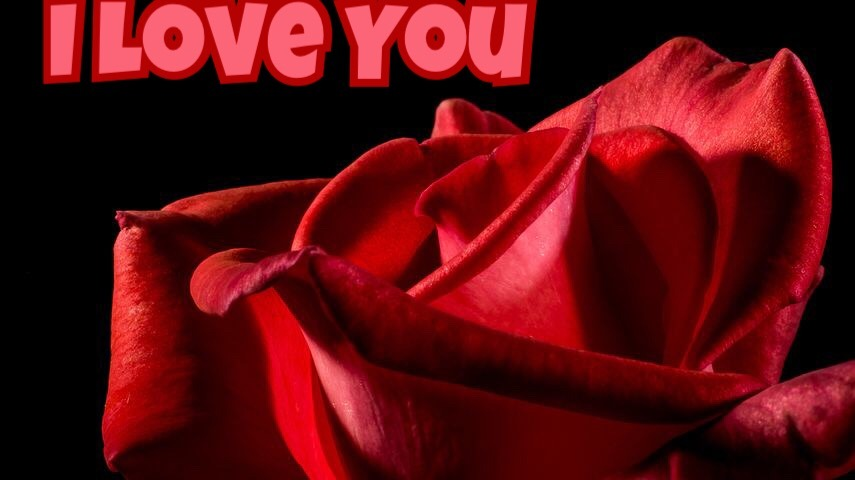 Lovely I love you red rose image