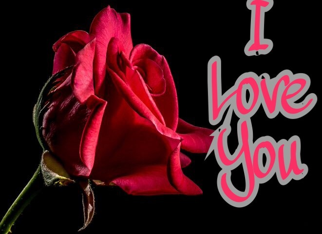 I love you image with rose for love
