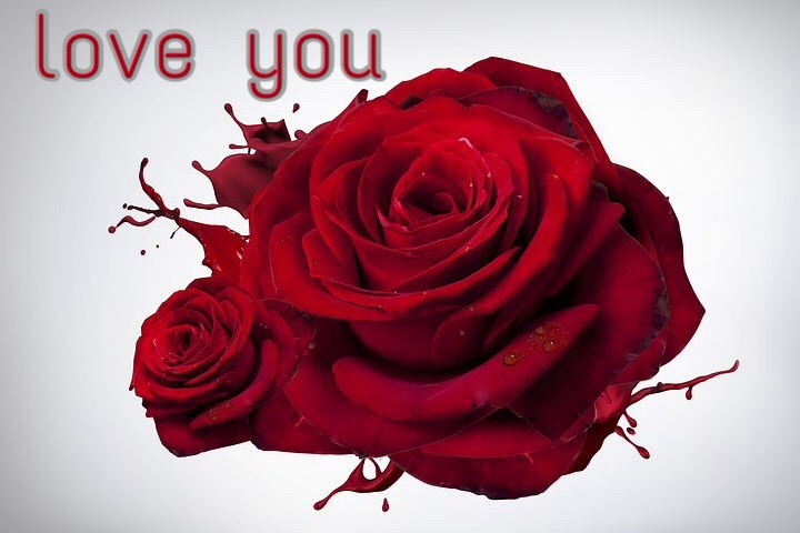 50+ I Love You Images With Roses