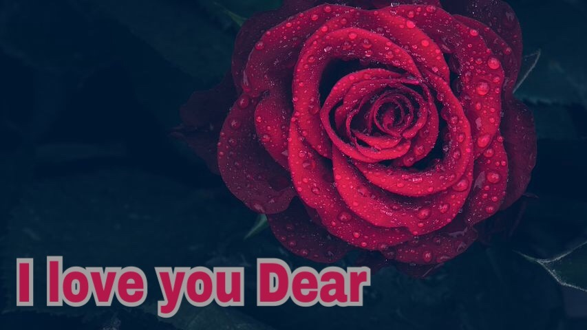 Worlds most beautiful I love you image with red rose