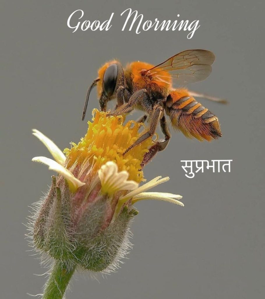 Latest picture of Good morning Hindi pics with flowers free download wallpaper