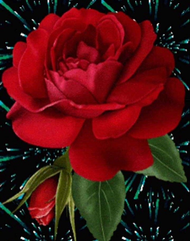 rose flower status for whatsapp