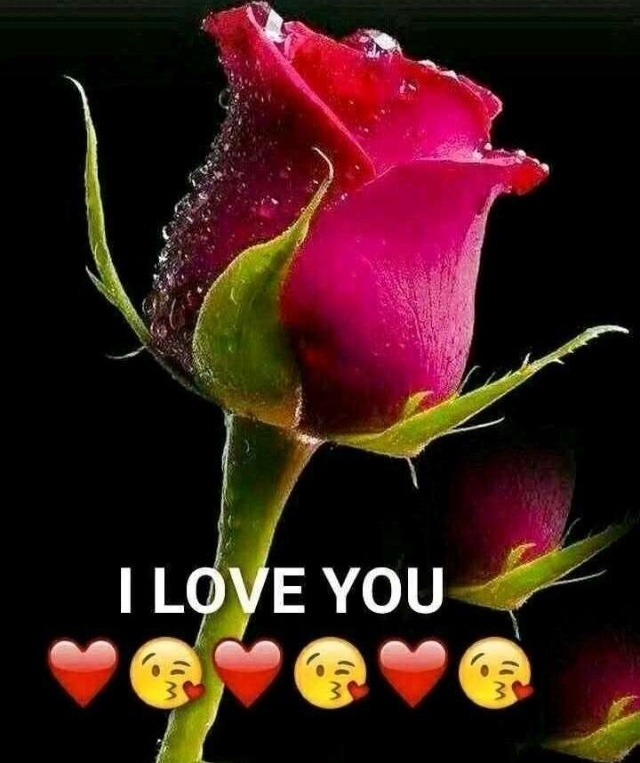 Red rose love whatsapp dp pic