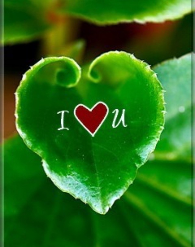 I Iove you Images On leaves
